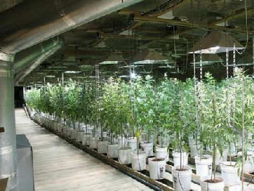 Indoor marijuana production totals 1% of all energy ...